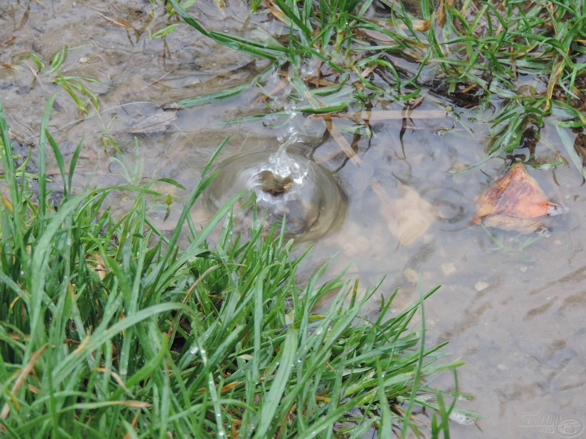 Mindenhol állt a víz, és hatalmas cseppekben esett az eső