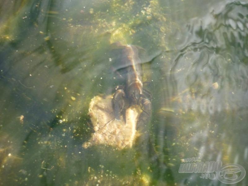 Az etetőanyagok működését szeretem magam előtt a vízben is látni. Ezúttal erre más is kíváncsi volt!