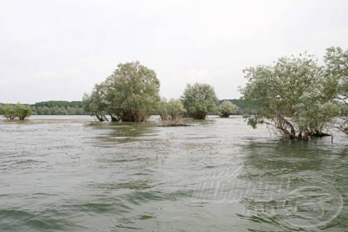 A tavaszi és nyár eleji magas vízállásnak köszönhetően rengeteg sziget, félsziget kerül víz alá, melyek mind kedvelt tartózkodási helyei a halaknak