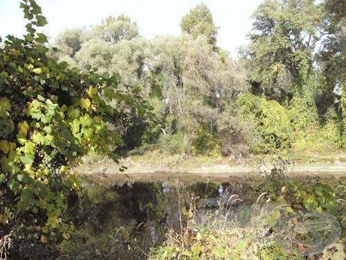 A Hunyadi-sziget mellett beszűkülő, vadregényes részek jó haltanyák is egyben