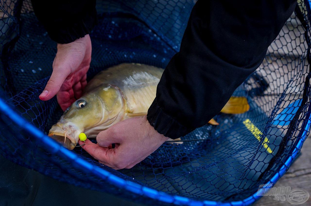 Matracon az utolsó hal