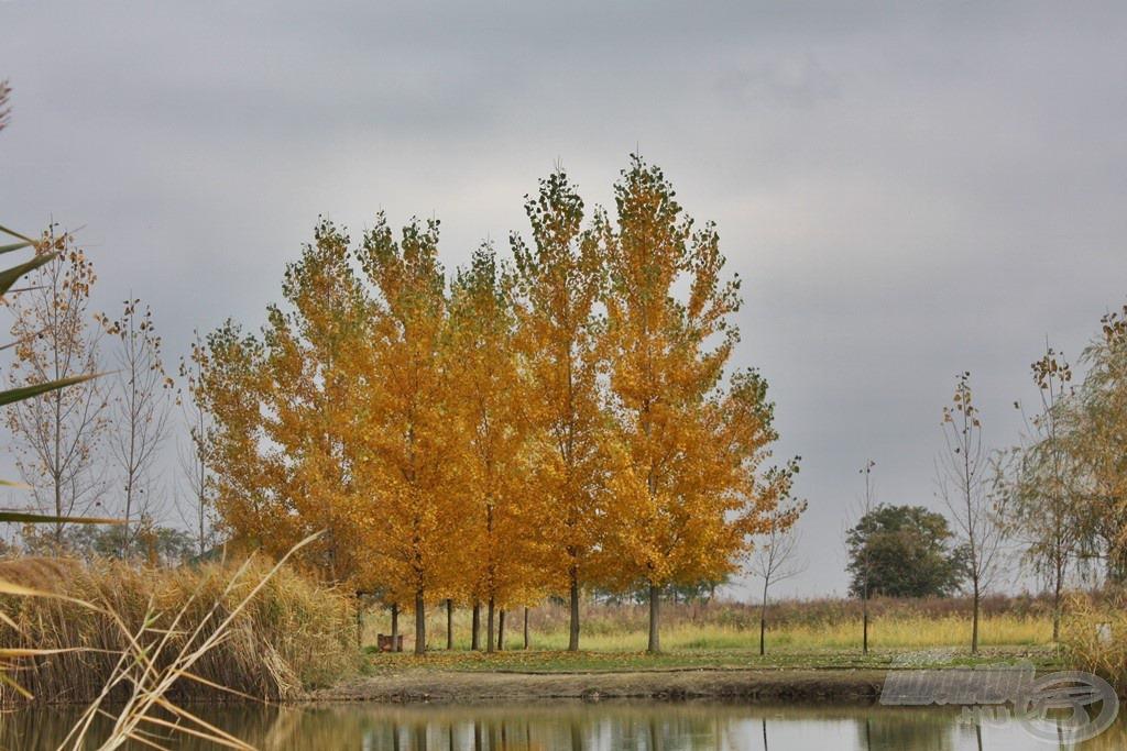 Pompás, aranysárga ruhába öltöztek a fák, a vizek partjai egyre üresebbek. Pedig ilyenkor is érdemes a természetben kedvenc hobbinknak hódolni!