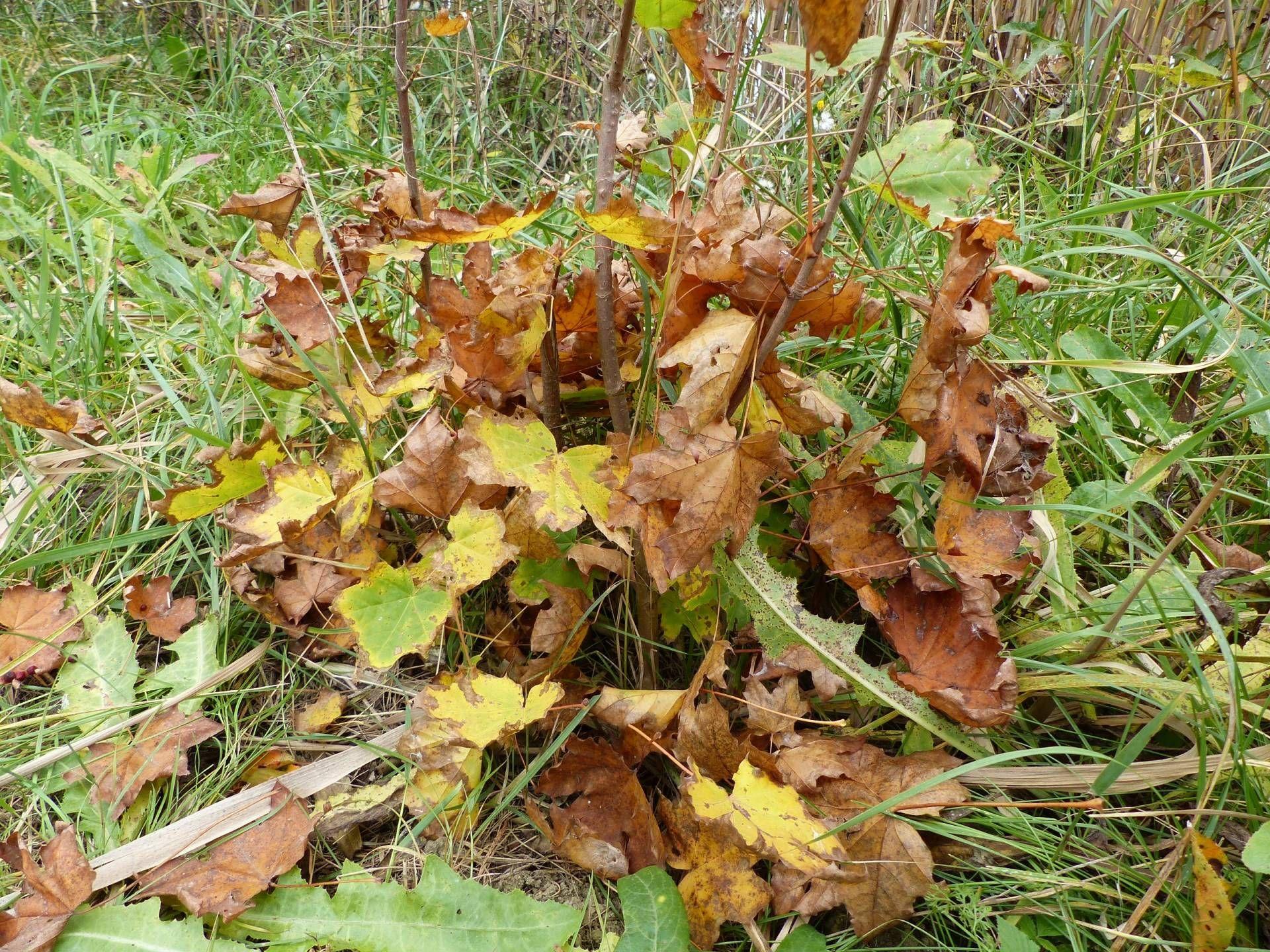 A késő ősz már beférkőzött a természet minden apró szegletébe