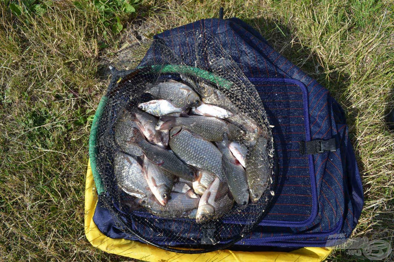 A délután termése és a kitartó horgászat eredménye