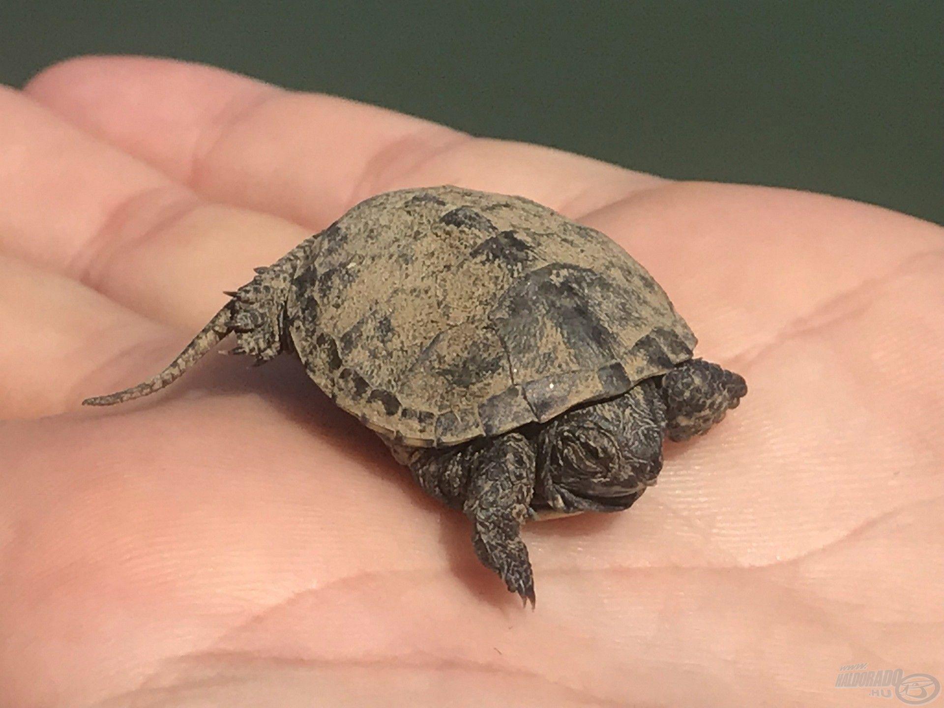 Egy aranyos kis teknőc is meglátogatott – reméljük, jó kabalánk lesz és szerencsét hoz!