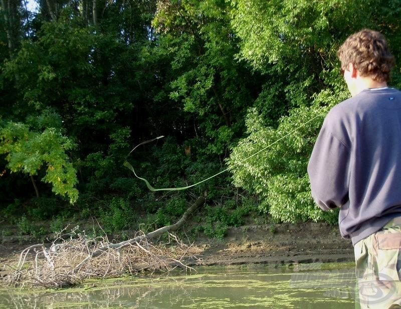 A bedőlt fák mögött szinte mindig álldogál 1-2 zsákmányra éhes balin