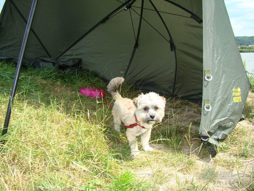 Figyelmes olvasóknak kakukktojás: egy nem versenyző kis kutya