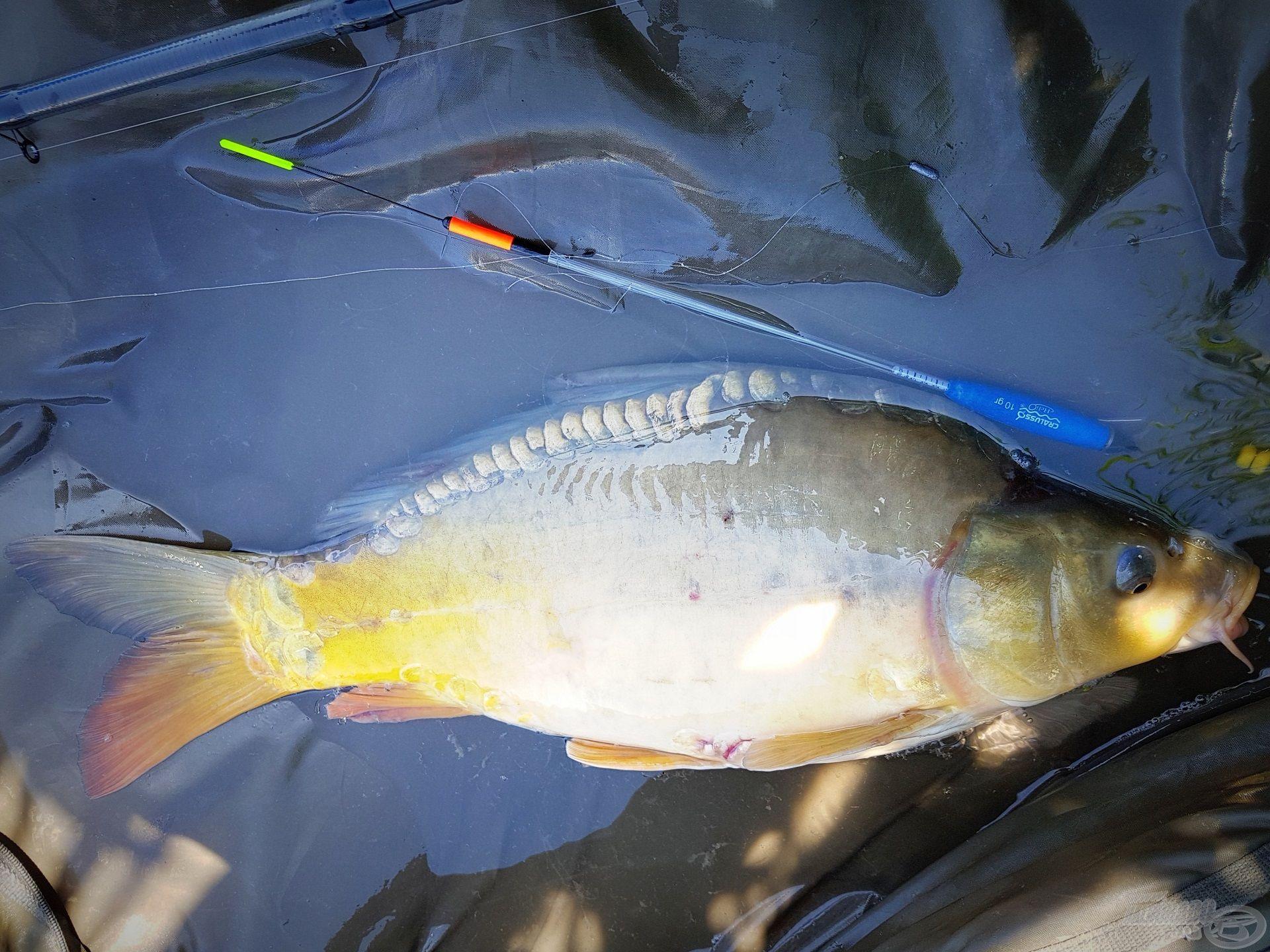Rövidesen matracon feküdt az első halam