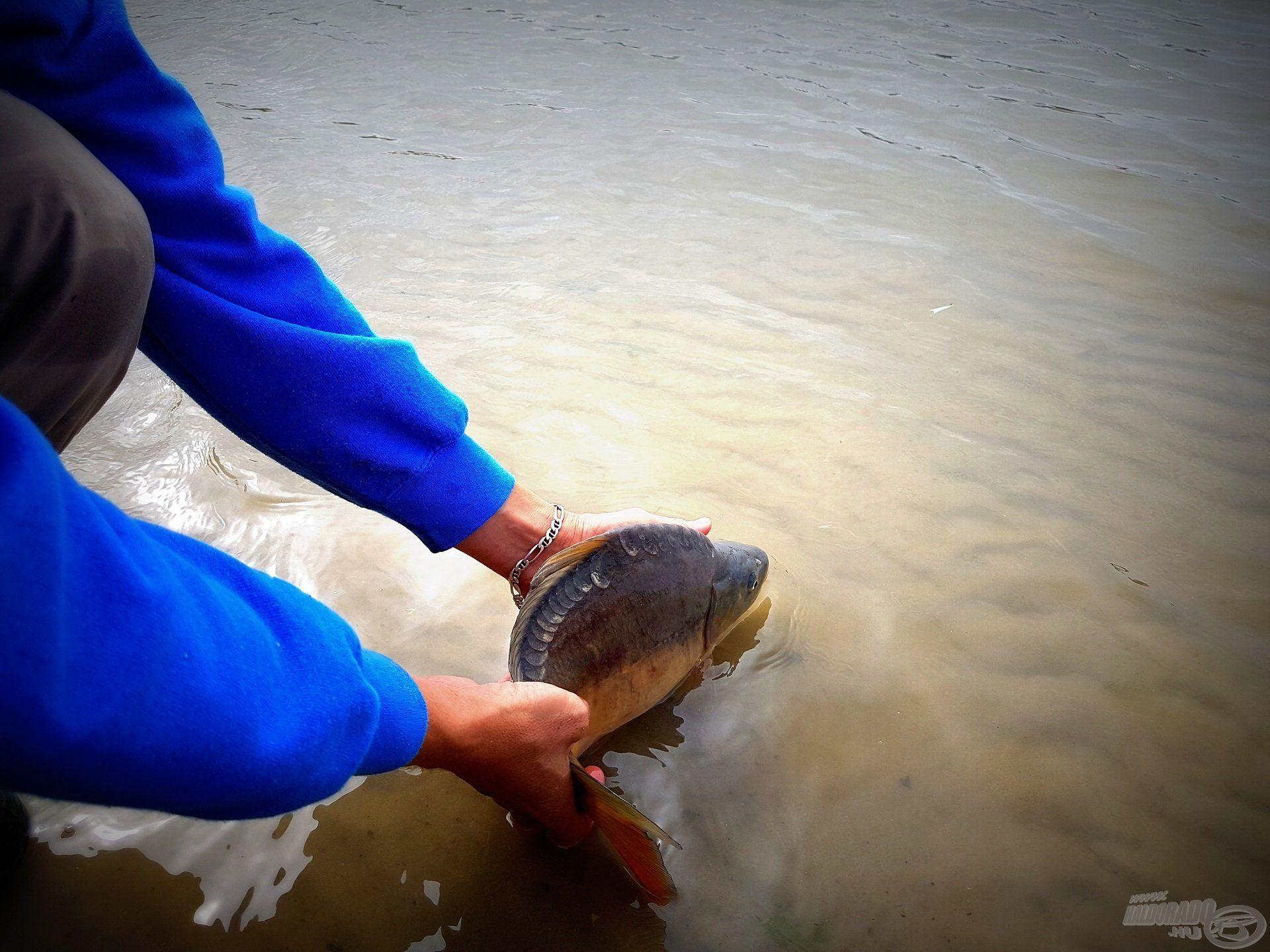 Az itteni horgászoknak szokatlan, nálam természetes mozzanat, ahogy a megfogott hal visszanyeri szabadságát