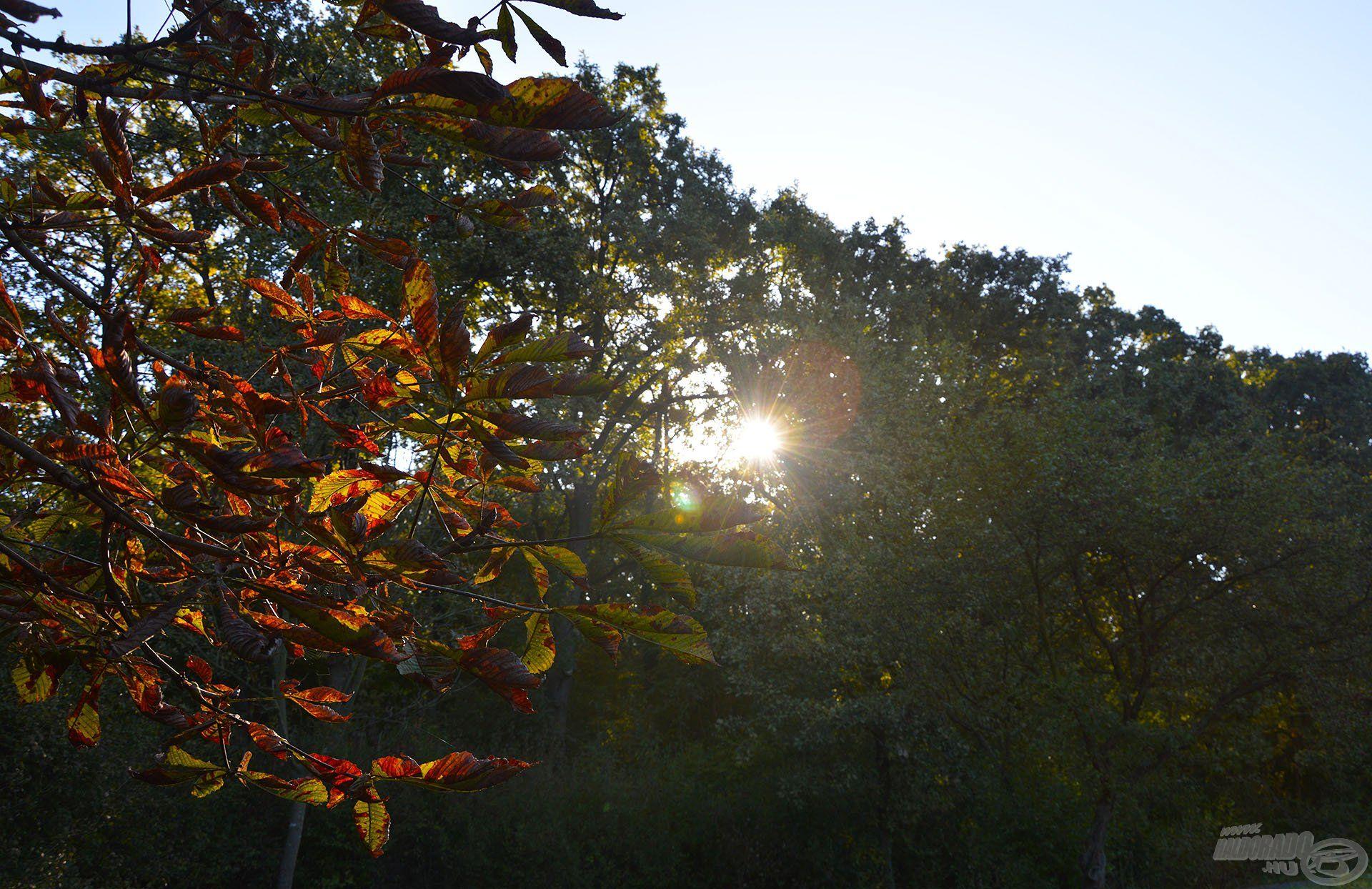 A nap szép lassan kúszott fölfelé, ám egy ideig még csak a mögöttem húzódó erdő takarásában ontotta sugarait