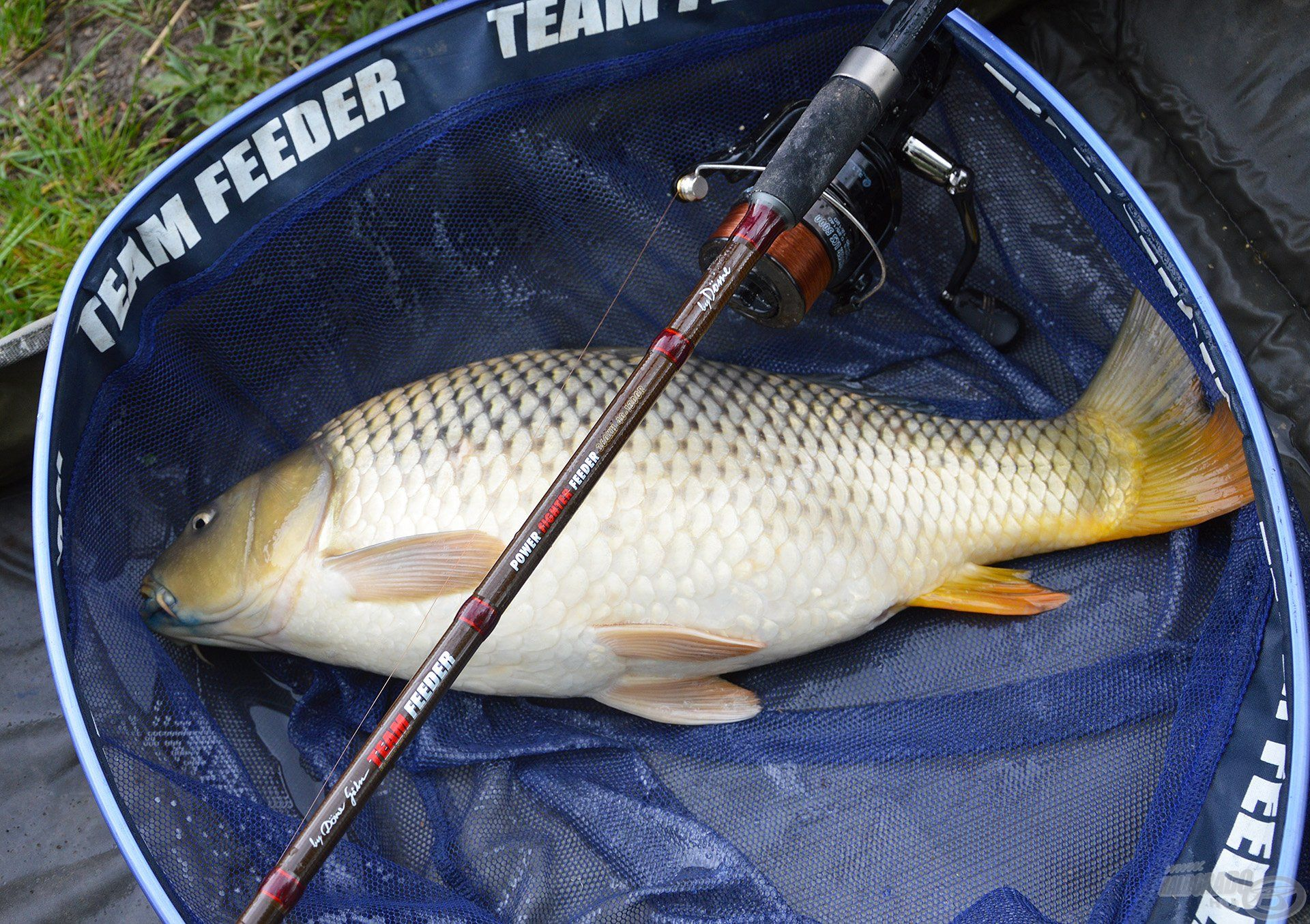 Minden hal megérdemli a kíméletes bánásmódot. A megfelelő merítőháló, matrac, szájfertőtlenítő bemutatására is hamarosan sor kerül