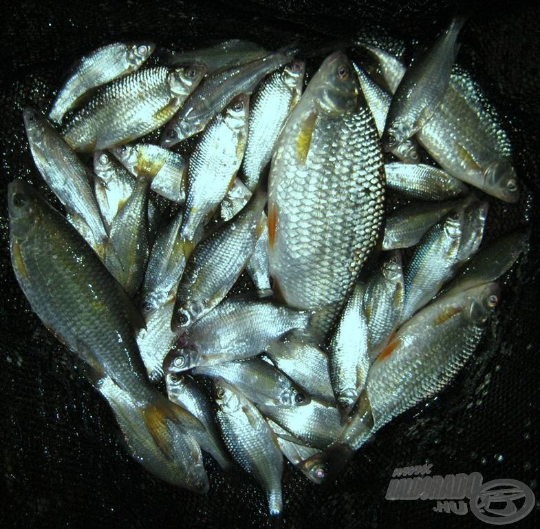 Fogásaim zöme efféle halakból tevődött össze