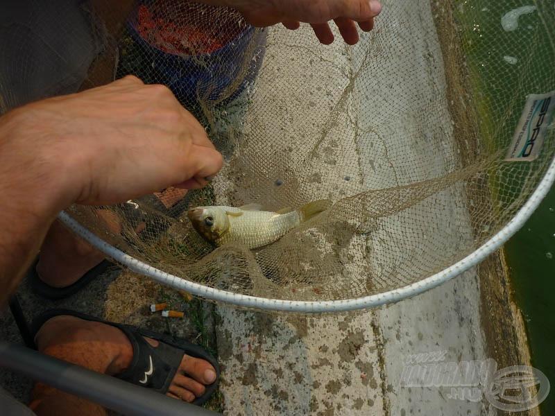 Minden halra szükség volt
