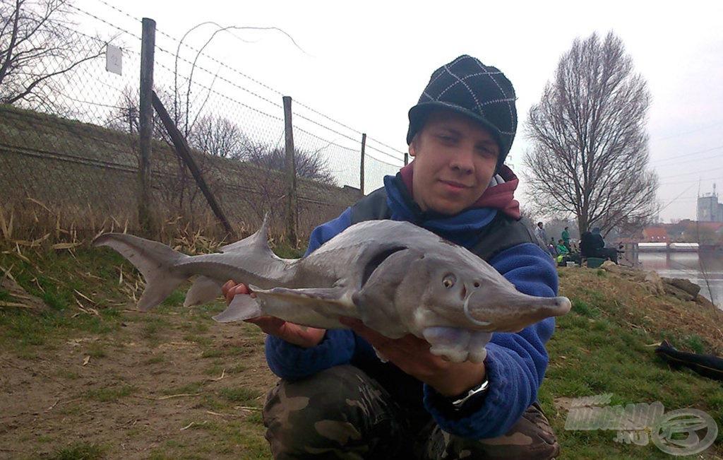 Rendkívül jól küzdő halak a tokok, fárasztásuk feederbottal igazi élmény