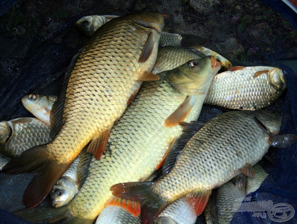 Termetes halakkal szeretnénk teszteltetni a felszereléseket