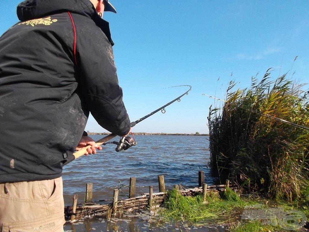 Az előző hal megfogása után még vissza sem tudtam dobni a szereléket, a másik boton már kapás volt, ráadásul a hal olyan erővel rohant ki, hogy alig bírtam megtartani