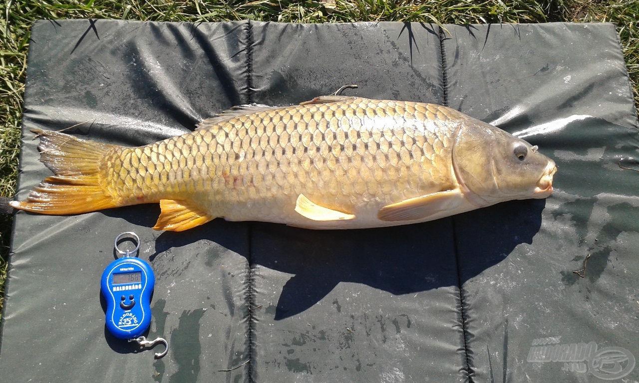 7,67 kg-ot nyomott