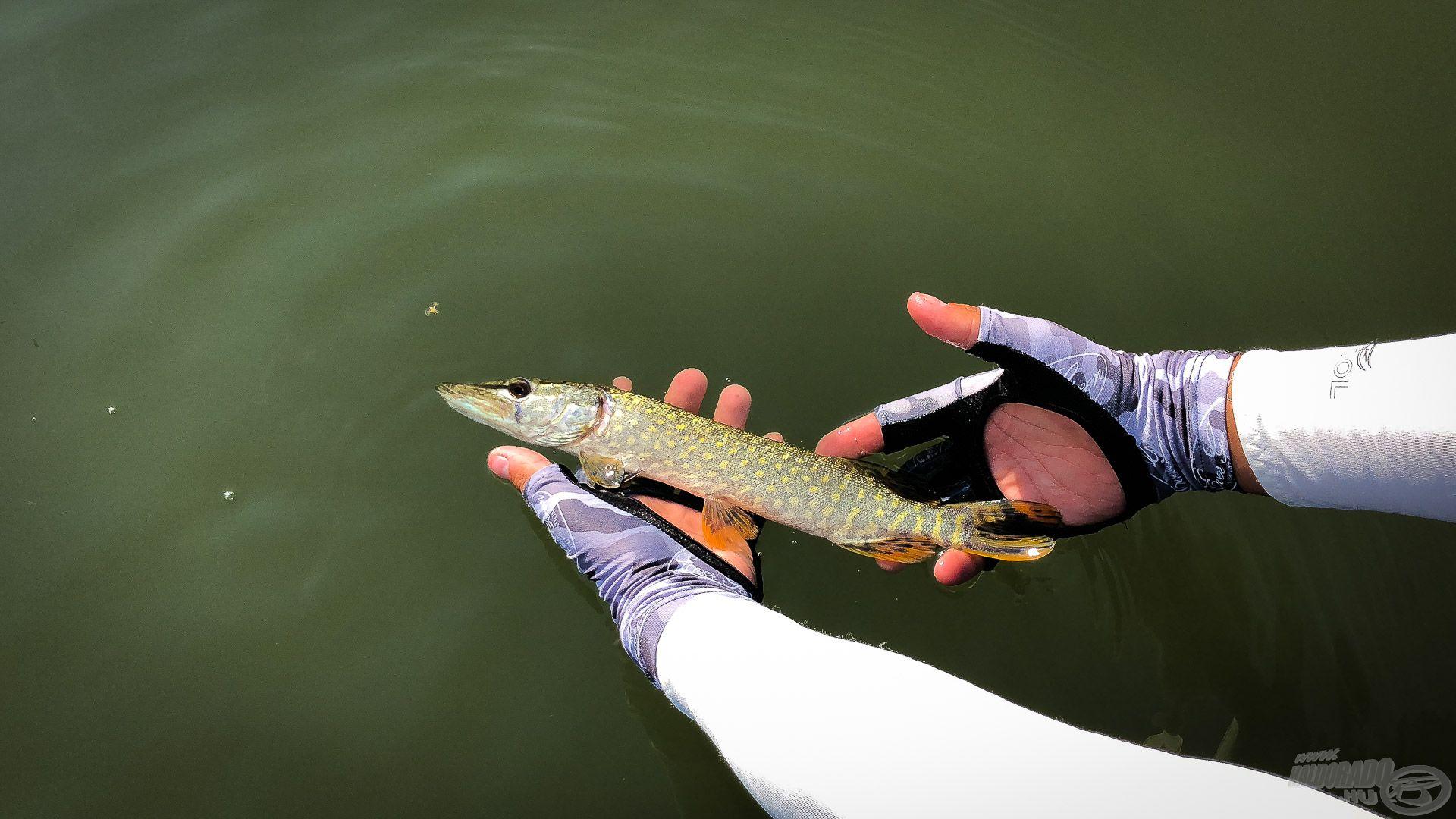 … majd ment vissza a folyóba