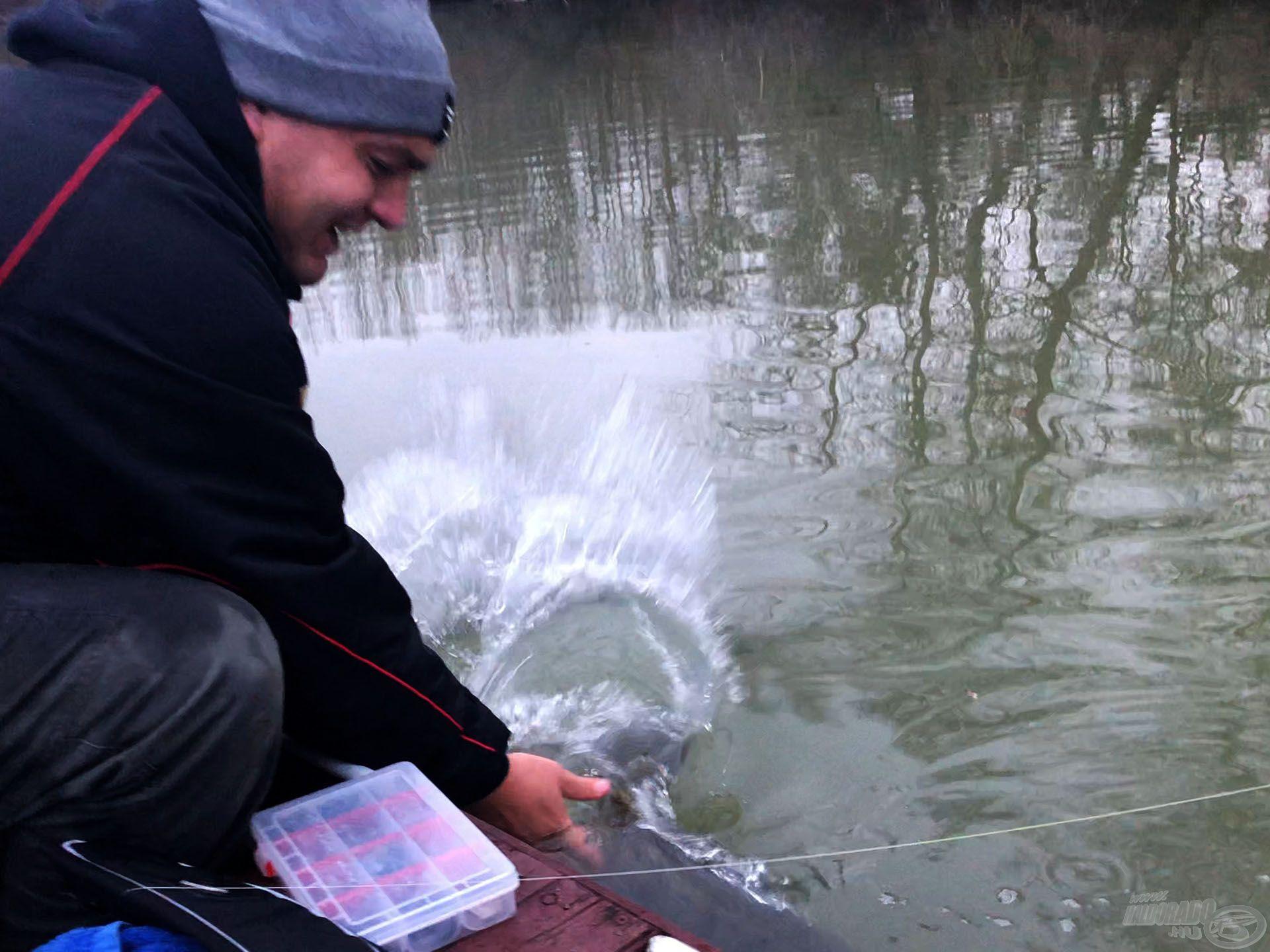 Furcsán nagyon jó érzés visszaengedni ezt a halat tele a jövő évek süllőivel!