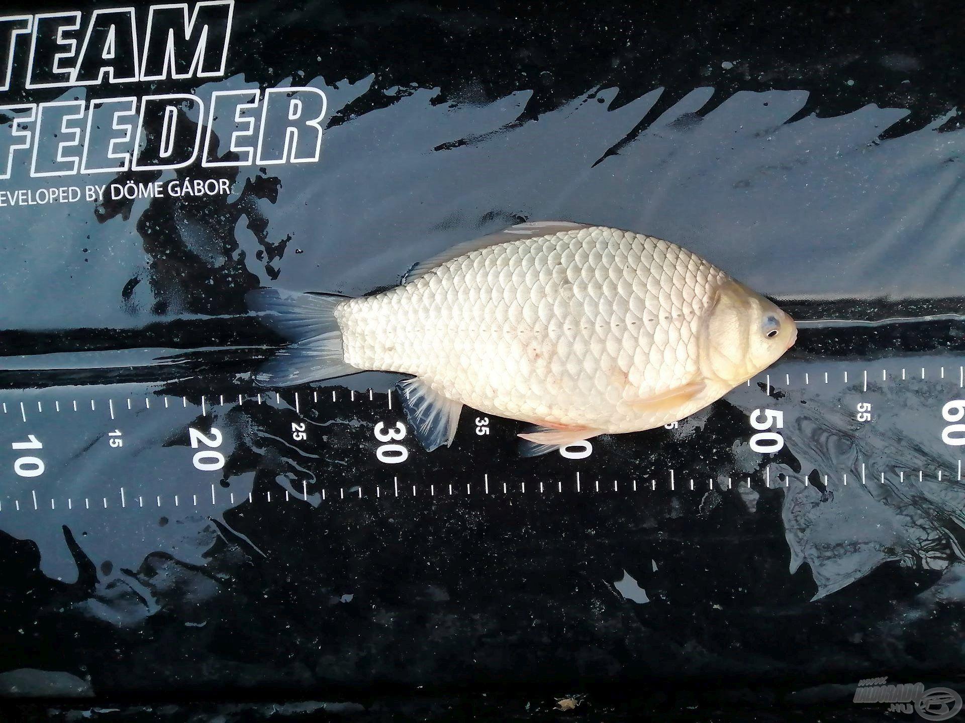 Méretükhöz képest igen erős halak