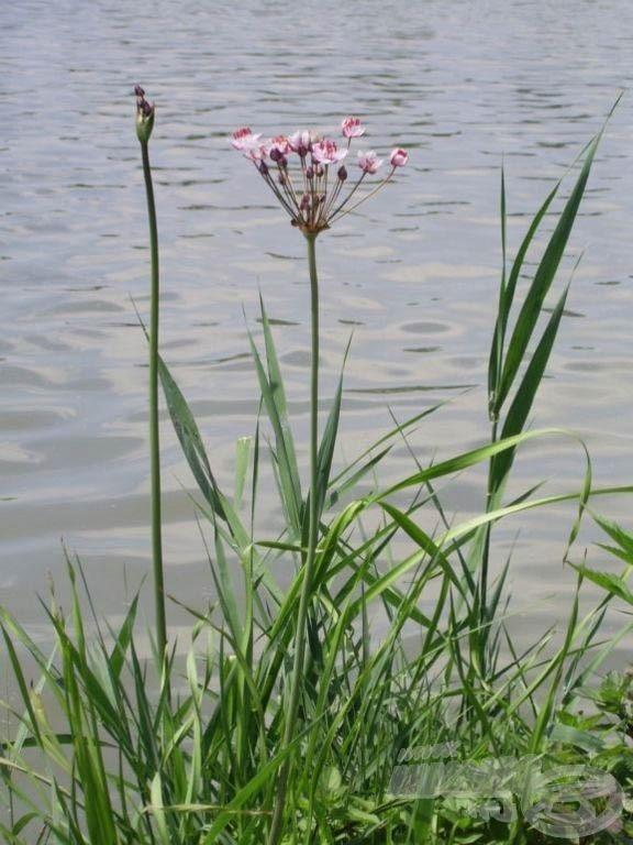 A virágkáka szép növény