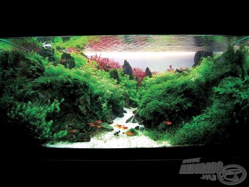 A Supernal forest 90 x 45 x 45 (cm) 180 liter
