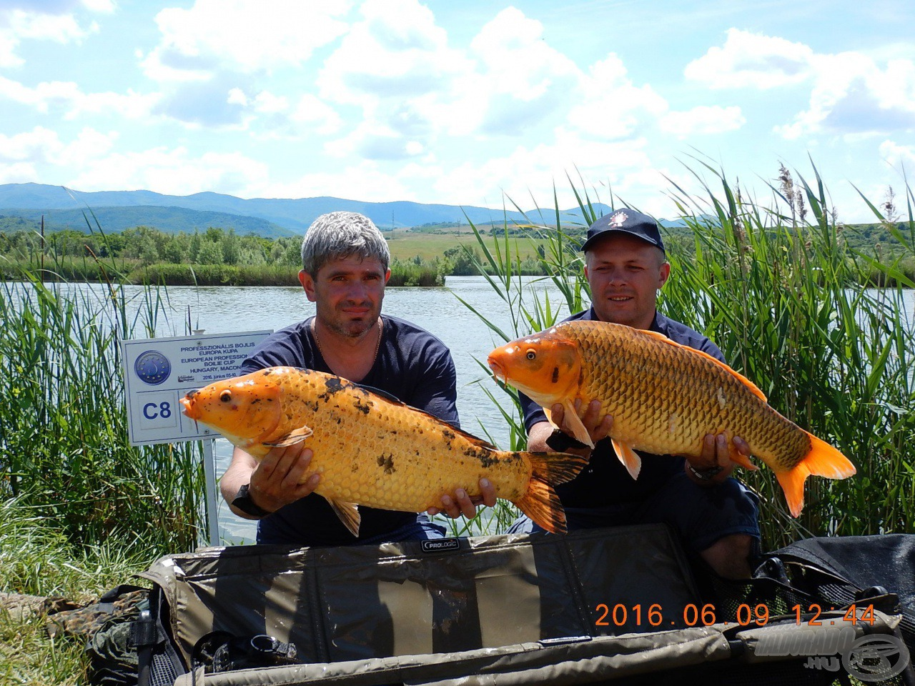 Kék és narancssárga: Ukrán barátaink két szép koi ponty társaságában