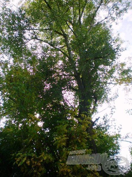 Jön az ősz. A fák is kezdenek más színekben játszani