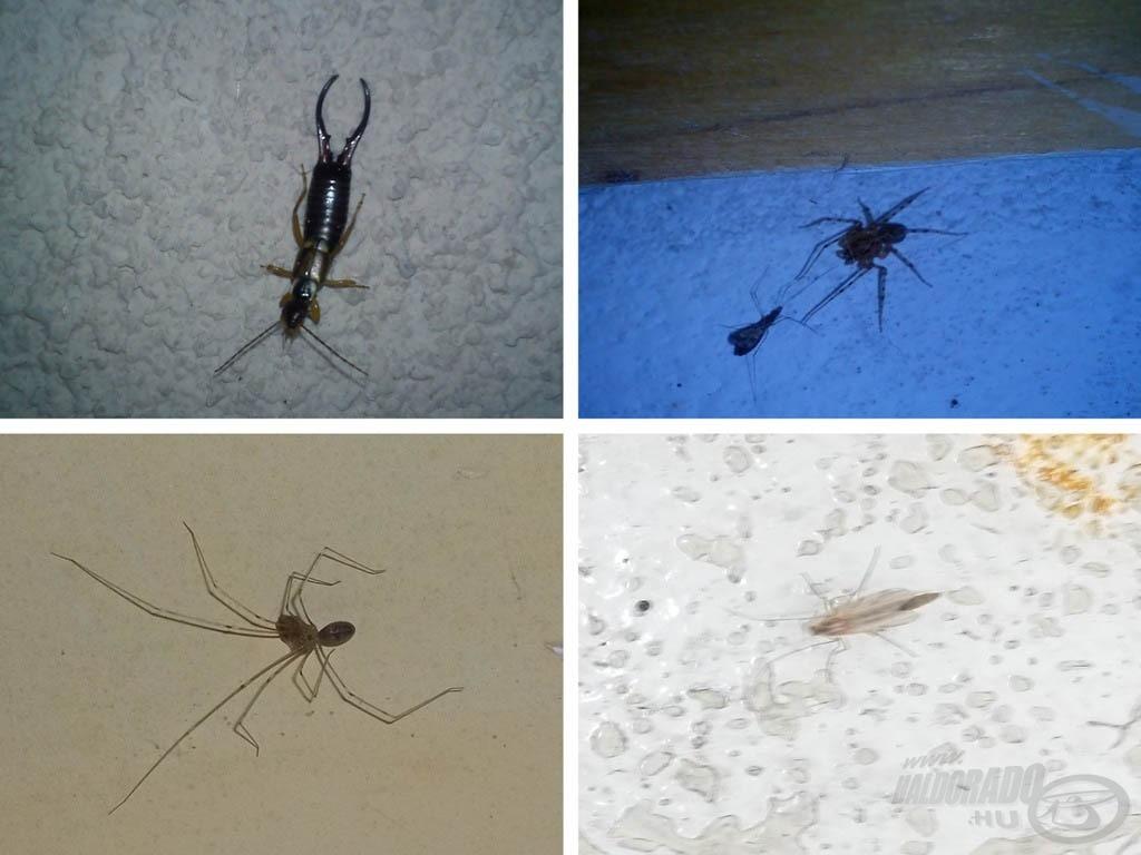 Van itt minden… többek között Kefete két kedvence: az árvaszúnyogra allergiás, a póktól viszolyog