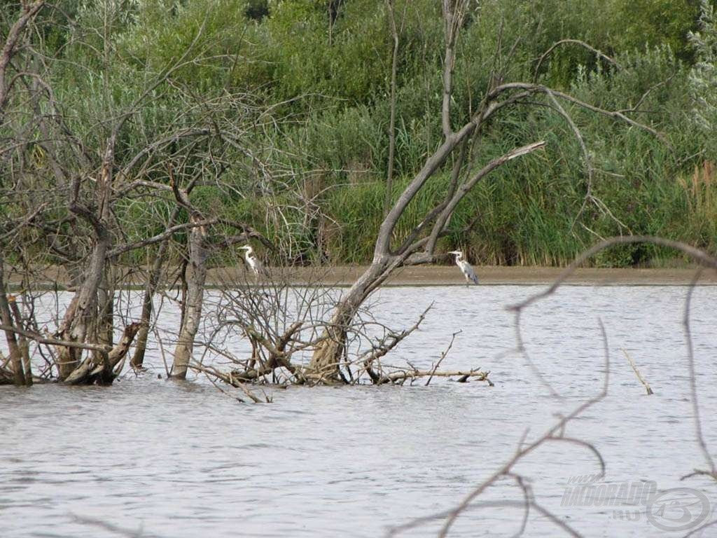 Vadkan-tó - az érintetlen természet