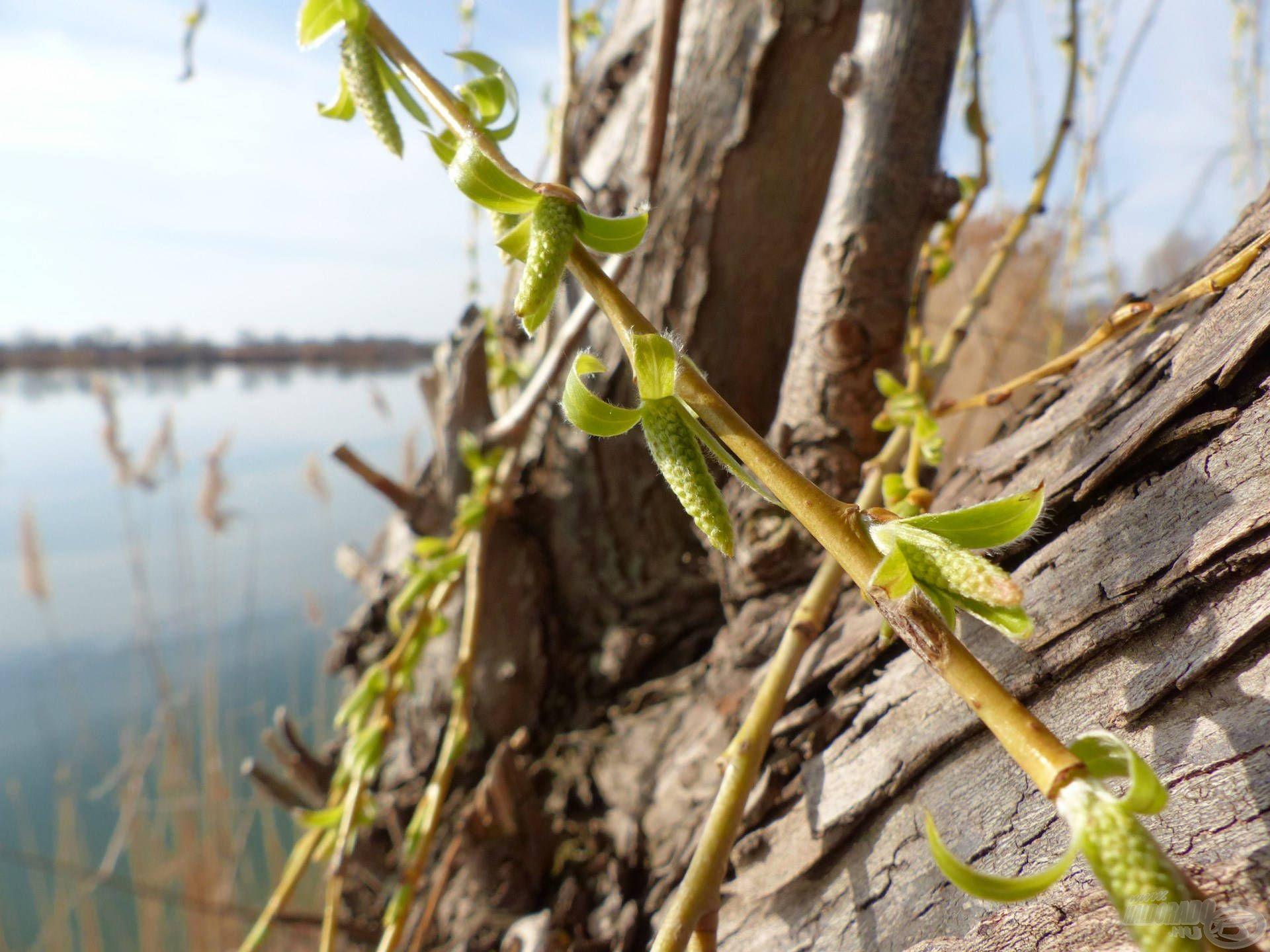 Gyönyörű idő volt, végre itt a tavasz, erről árulkodik a természet is