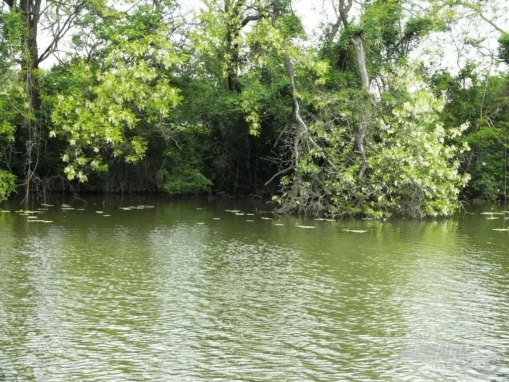 A meghorgászandó rész a vízbe lógó faág előtti egy-két méteres terület
