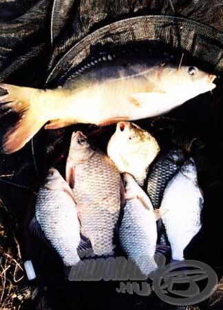 Sikeres tavaszi horgászat eredményei