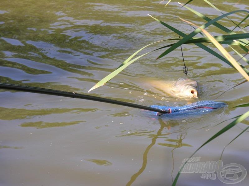 … feederen jött a hal…