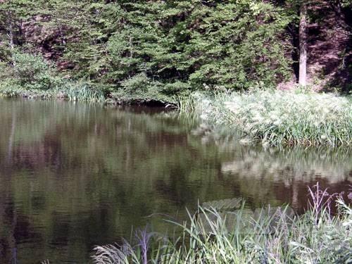 A felső tó délkeleti részén megtelepedett nád jelzi a vízforgalmi stabilitást
