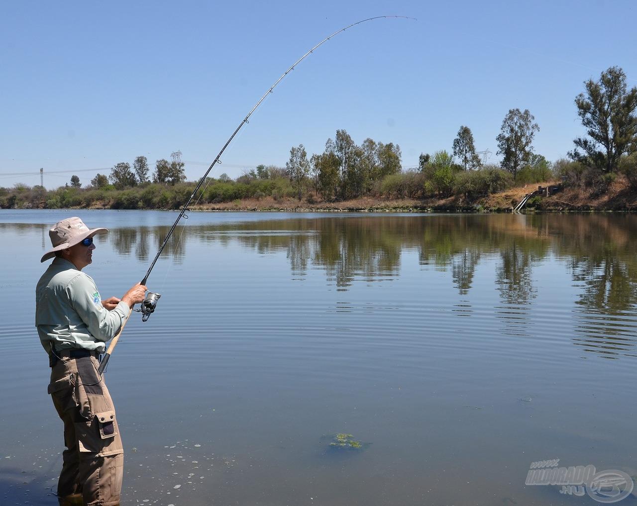 Szinte alig hittem én is a szememnek, amikor alig pár perccel a horgászat megkezdése után lecsavarta a botomat a bottartóról az első érdeklődő