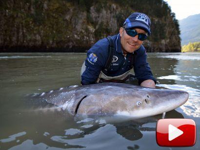 Vadvízi kalandok 28. rész - A nagy fehér tokhal