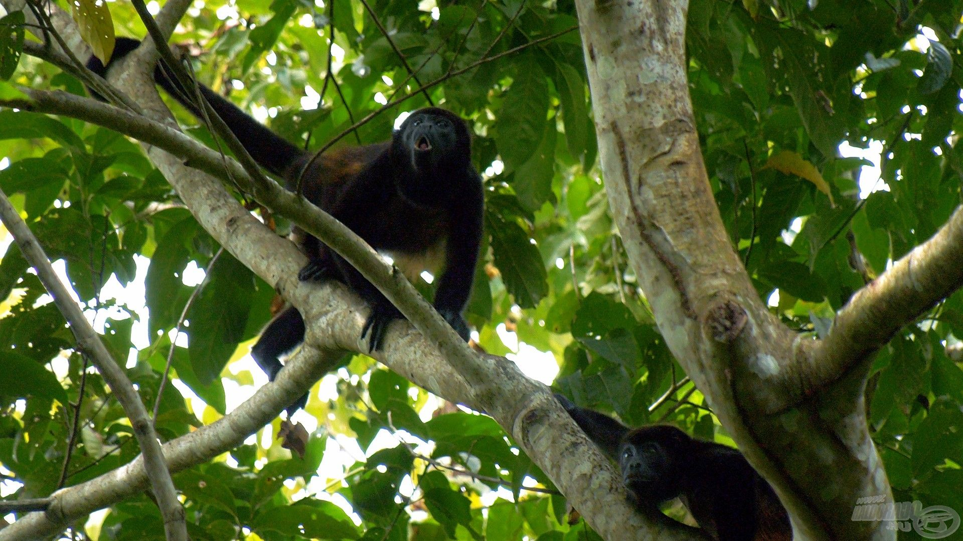 Megdöbbentően gazdag Costa Rica állatvilága