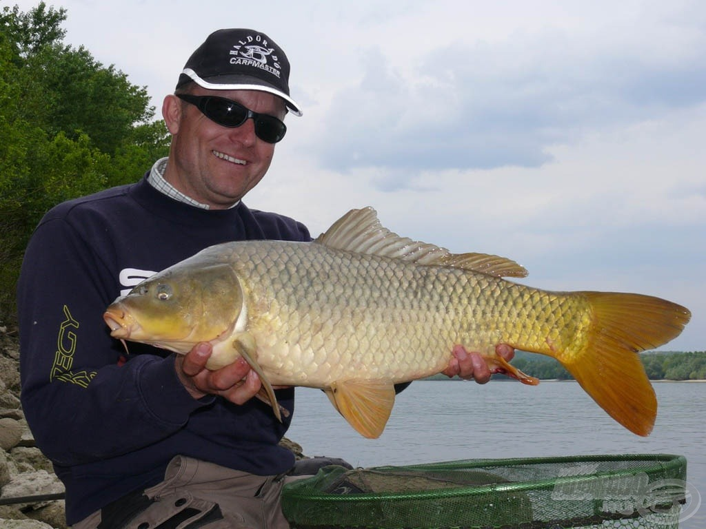 A másnapi ráadás horgászat legnagyobb hala ez a 4,66 kilós nyurgaponty volt