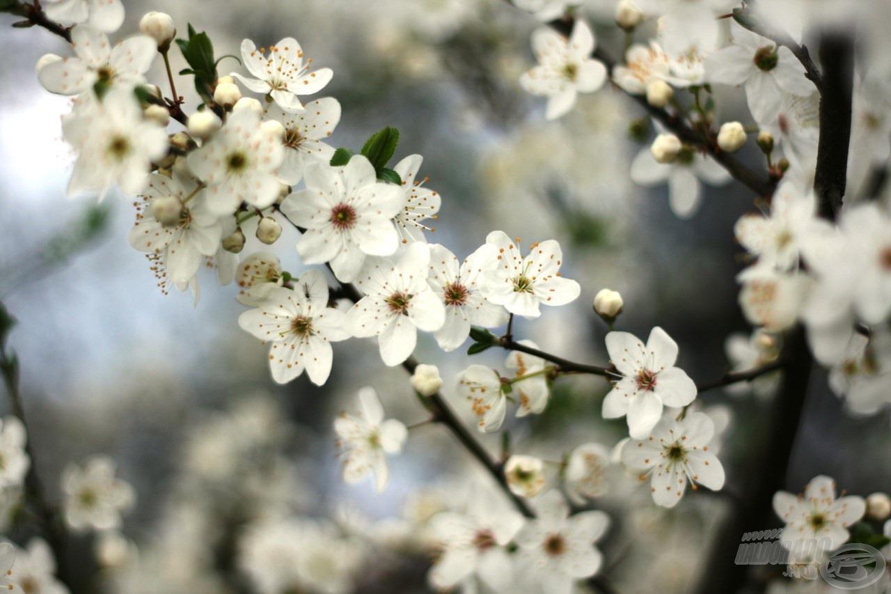 Megannyi kicsi virág
