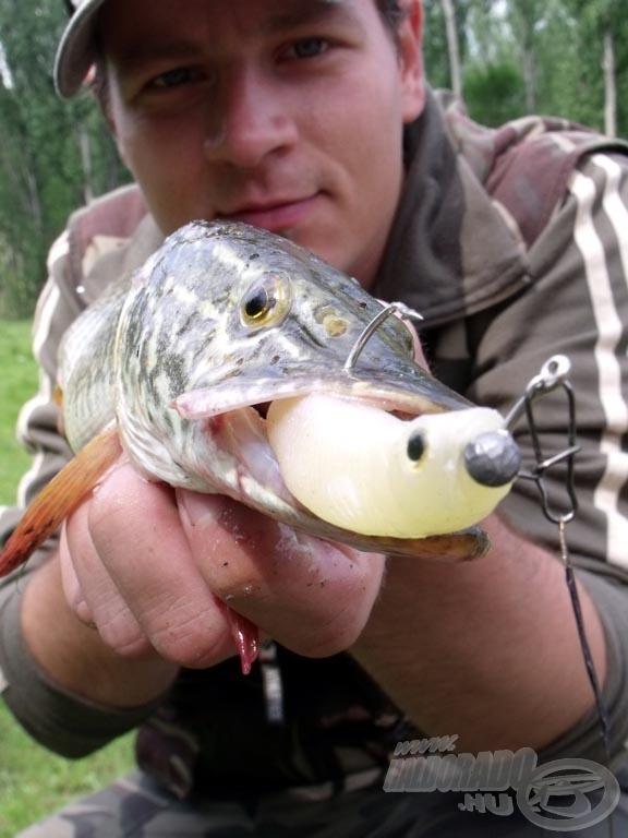 Amikor nagy hal megeszi a kis halat…