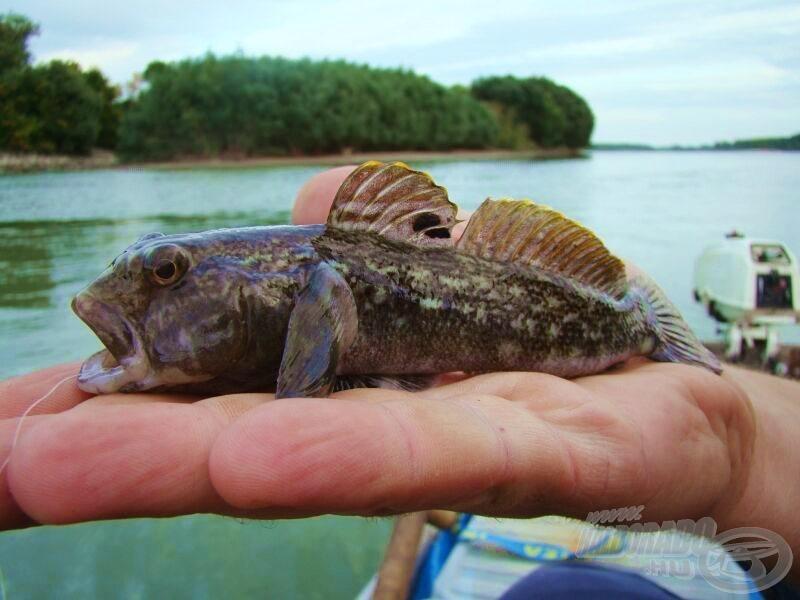 """Így nézhetett ki az első hal, amelyik a szárazföldre """"lépett""""?"""