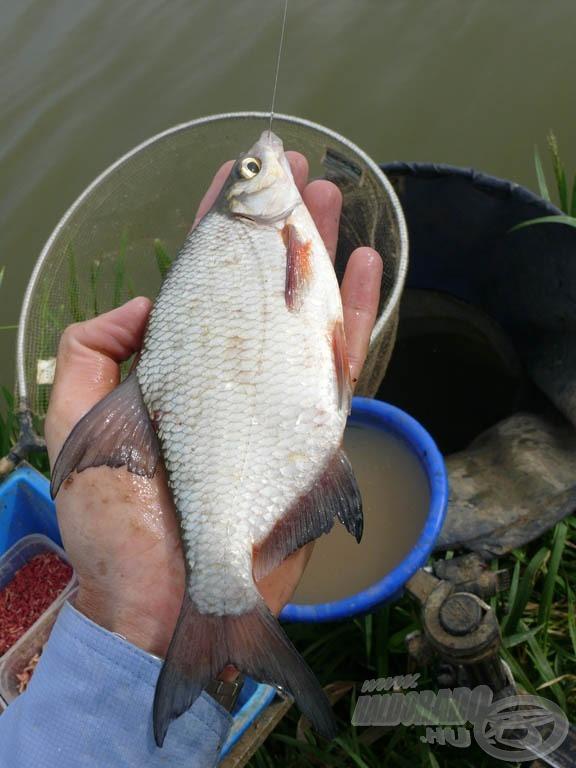 A víz legfelső rétegében karikakeszegek és kárászok voltak a fő halak…