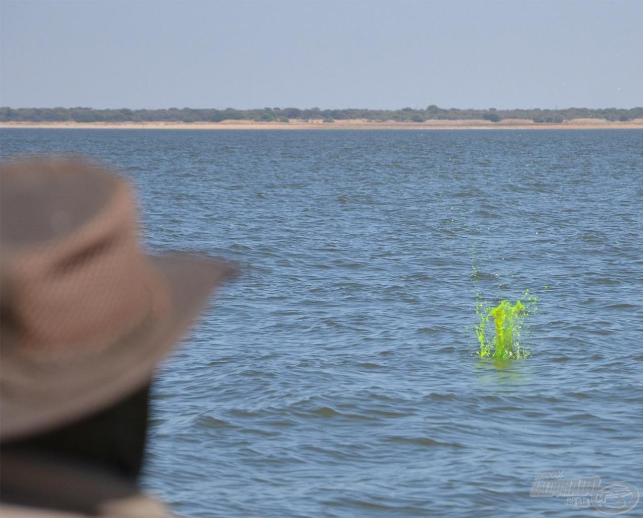 A zöld fluoreszcein festékporral kevert etetőanyag ezt hivatott utánozni, de csak lecsendesedett, lassan áramló vízben volt szabad bevetni