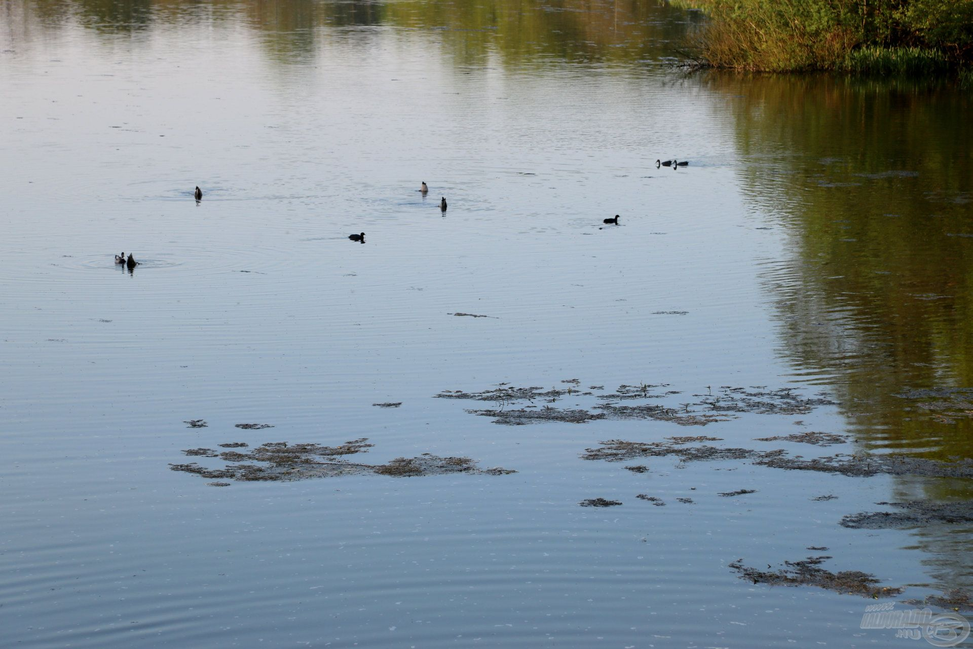 A hínár sem könnyítette meg a dolgunkat, ami sok helyen a víz tetejéig nőtt