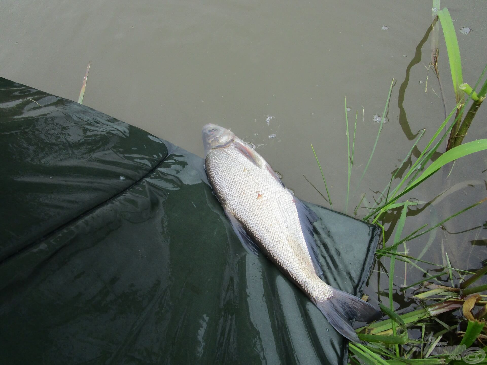 Fotózás után már úszott is tovább