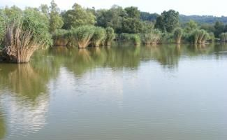 Almamelléki Horgásztó