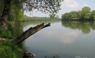 Dráva  -  Baranya megyei szakasz