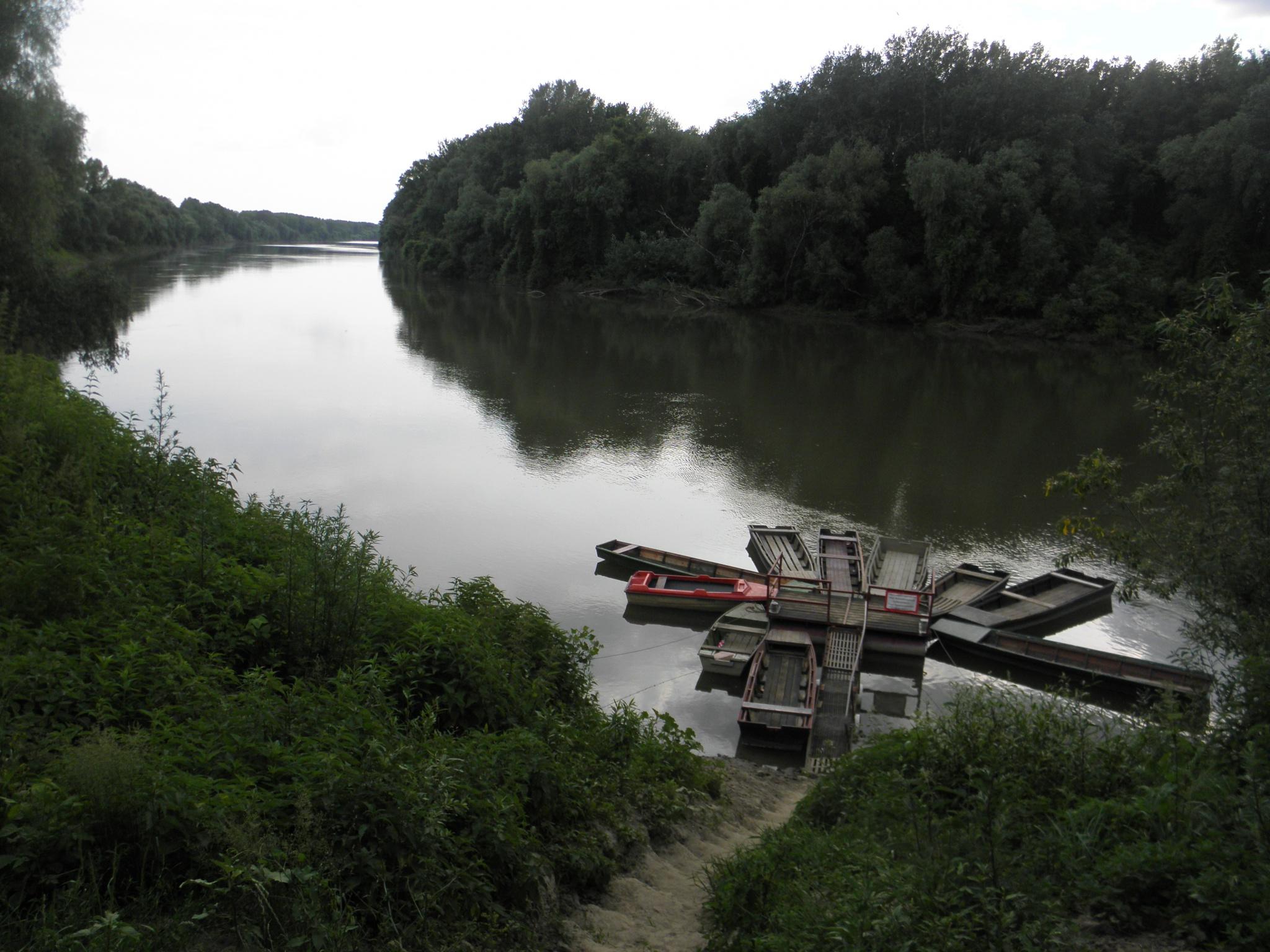 Tisza folyó és hullámtéri holtágai Szórói, Kovácsi, Gói-tói és Csatlói Holt-Tisza